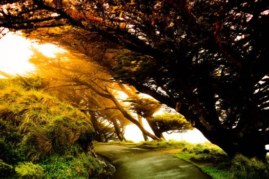 Point Reyes - Trees by xdgrace