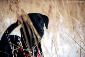Hunting Dog by Wild-Kegan