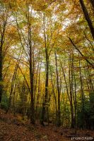 Autumn in Nebrodi mountains.23 by rebelblues