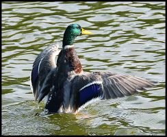 Water Ballet by FrankAndCarySTOCK