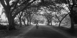 tunnel of trees to ride under by shash-frankenstien