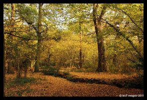 Swithland Woods 2 by MichaelJTopley