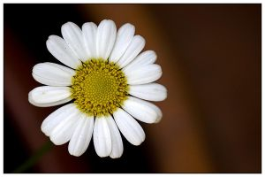yellow and white by the drow - �i�ek AvaTarLaR�