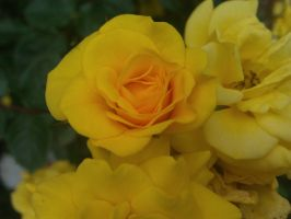 Little Yellow flower by demonlucy