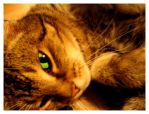 a cats dream by rike