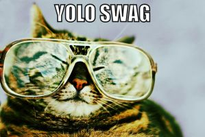 #YOLOSWAG Cat by itatchi42