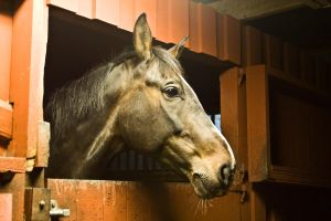 STOCK Horse in the stable by Stockandstare
