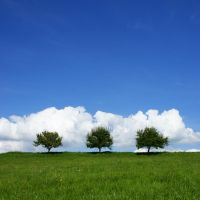 Three Summer Trees by mARTinimal