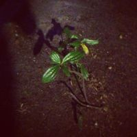 Sprouting in the night by XxLovelyHeartedxX