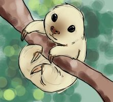 Baby Sloth by ojwo