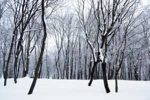 stock: winter forest 5(credit and show the result) by amka-stock