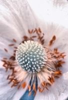 Flower macro by daily-telegraph