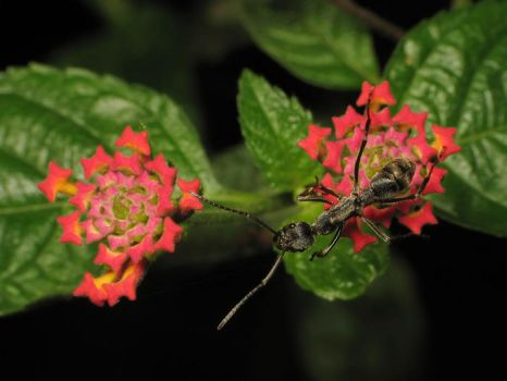ant and flowers by mutmut