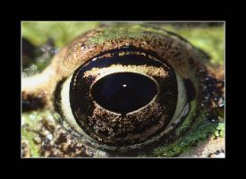 Eye of Frog by unereveur