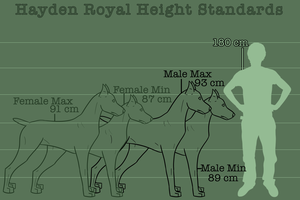 The Hayden Royal: Sizes and Personalities by Sommer-Studios