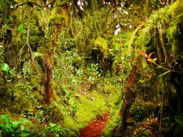 Mossy Forest - FOR SALE by kuma-x