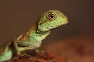 Young Water dragon by AngiWallace