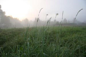 foggy field by Ajdica