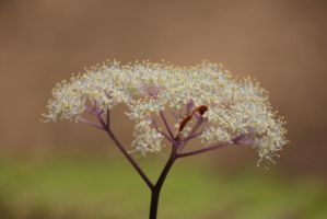 little mountain flowers 2 by rayna23