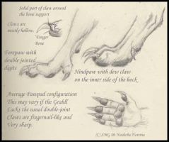 Grahll Paw study by Nashoba-Hostina