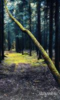 In the woods ... by SasoSi