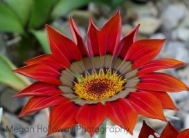 Red Flower by Meggs255