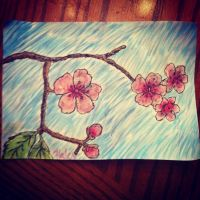 Cherry blossoms by Haleyynicole