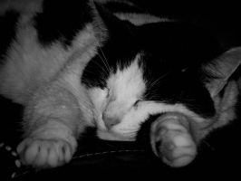 Cat black and  white 2 by Fabharty