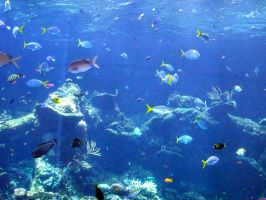 Coral-reef7 by Trisaw1