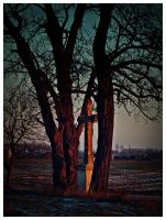 Cross and trees by Csipesz