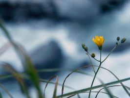 Tiny Flower at the gates of haast by Deceptico