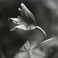 The first sprouts by Viand