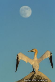 Fly me to the Moon by GMCPhotographics