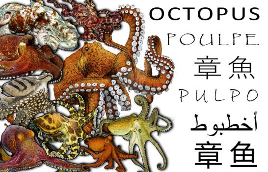Octopus Collage by rogerdhall