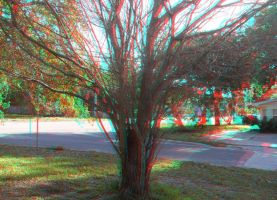 Front Yard Tree 3D Glasses by KingOfNeon