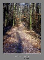 Forest path by viKING by vikingexposure