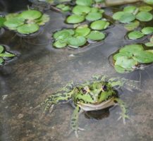 frogs of my life 2 by ingeline-art
