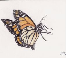 Monarch Butterfly by Naiengele