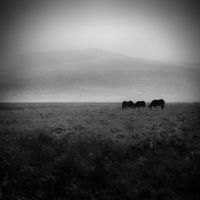 Horses Gloomy Pasture by Matt-ikus
