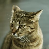 Cat by Vinsent1992