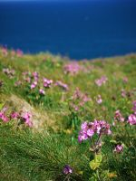 cliffs of green and pink by Blue-eyed-Kelpie