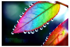 Leaf's Colours by marym-sueraya