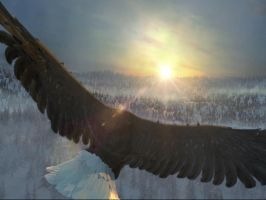 Eagle sunrise Assassin's Creed 3 by goldsilveriron