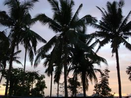 Coconut Trees in Philli by Joe-Style