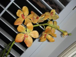 silk orchids by window by azndlish