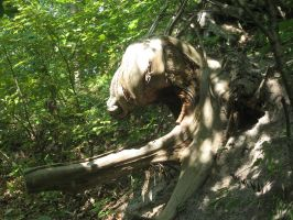 Elk Tree - Starved Rock by Azure-Rose-Cosplay