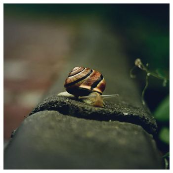 just another snail after rain by jacku157
