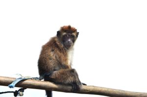monkey on a bar by jarn