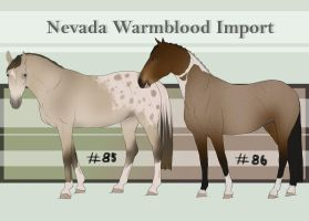 Nevada Warmblood 85-86 by BRls-love-is-MY-Live