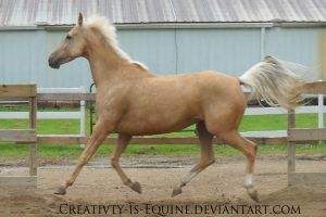 Horse Stock 6 by Creativty-is-Equine